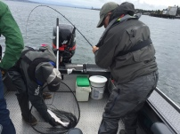 Abby's Dad, Lee, organized a Columbia River fishing trip and ended up landing the only keeper
